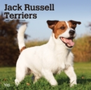 Jack Russell Terriers Intl 2020 Square Wall Calendar - Book