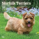 Norfolk Terriers 2020 Square Wall Calendar - Book