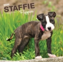 Staffordshire Bull Terrier Puppies 2020 Square Wall Calendar - Book