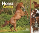 Horse Lovers 2020 Day-to-Day Calendar - Book