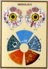 Iridology -- A4 - Book