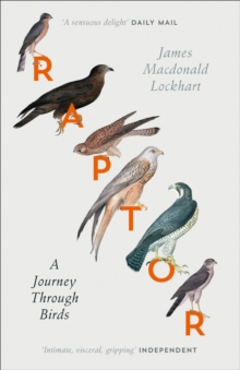 Raptor: A Journey Through Birds, EPUB eBook