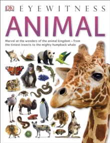Animal, Paperback / softback Book