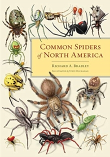 Common Spiders of North America, Paperback / softback Book