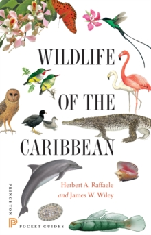 Wildlife of the Caribbean, Paperback / softback Book