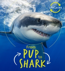 Lifecycles - Pup To Shark, Paperback / softback Book