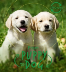Lifecycles - Pup To Dog, Paperback / softback Book