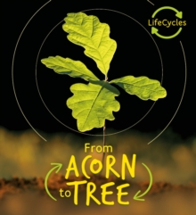 Lifecycles - Acorn to Tree, Paperback / softback Book
