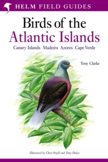 A Field Guide to the Birds of the Atlantic Islands : Canary Islands, Madeira, Azores, Cape Verde, Paperback Book