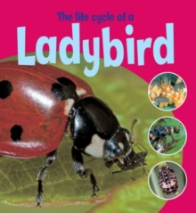 Learning About Life Cycles: The Life Cycle of a Ladybird, Paperback Book