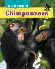 Animal Families: Chimpanzees, Hardback Book