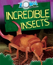 Zoom in On: Incredible Insects, Paperback / softback Book