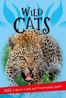 It's all about... Wild Cats, Paperback / softback Book