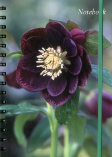 Notebook Hellebore : 128 Page Fine Lined Notebook, Hardback Book