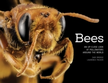 Bees : An Up-Close Look at Pollinators Around the World, Hardback Book