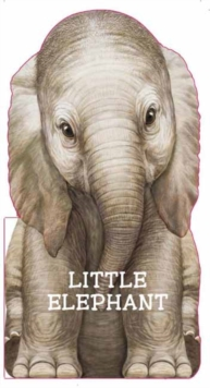 Little Elephant, Board book Book