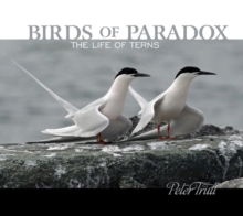 Birds of Paradox: The Life of Terns, Hardback Book