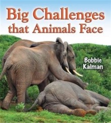 Big Challenges That Animals Face, Paperback Book
