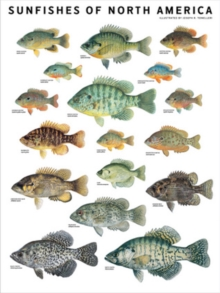 Sunfishes of North America, Poster Book