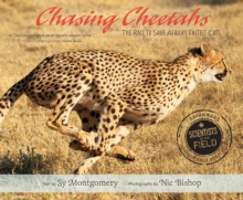 Chasing Cheetahs : The Race to Save Africa's Fastest Cat, Paperback Book