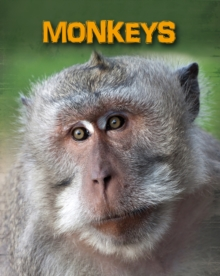 Monkeys, Paperback Book