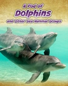 A Pod of Dolphins : and Other Sea Mammal Groups, Paperback Book
