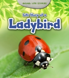 Life Story of a Ladybird, Paperback Book