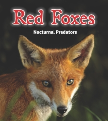 Red Foxes : Nocturnal Predators, Paperback / softback Book