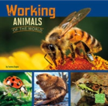 Working Animals of the World, Paperback Book