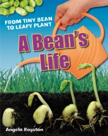 A Bean's Life : Age 6-7, below average readers, Paperback / softback Book
