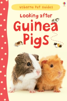 Looking After Guinea Pigs, Hardback Book