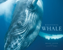 Beautiful Whale, Hardback Book