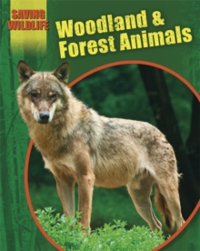 Saving Wildlife: Woodland and Forest Animals, Paperback / softback Book