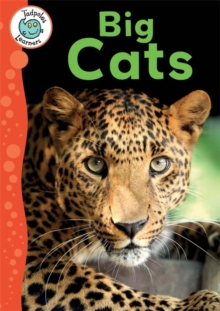 Tadpoles Learners: Big Cats, Hardback Book