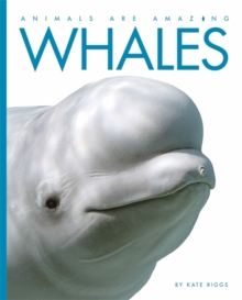 Animals Are Amazing: Whales, Hardback Book