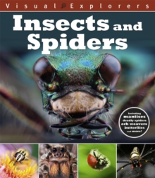 Insects and Spiders, Hardback Book
