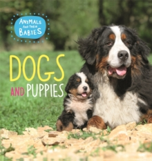 Animals and their Babies: Dogs & puppies, Paperback / softback Book