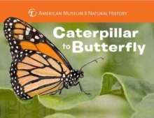 Caterpillar to Butterfly, Board book Book