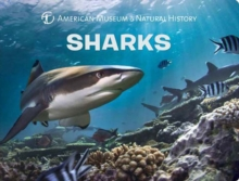 Sharks, Board book Book