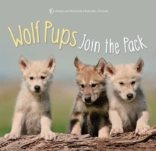 Wolf Pups Join the Pack, Hardback Book