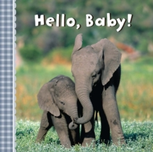 Hello, Baby!, Board book Book