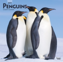 Penguins 2019 Square Wall Calendar, Calendar Book