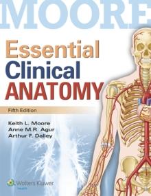 Keith L Moore Anatomy Pdf