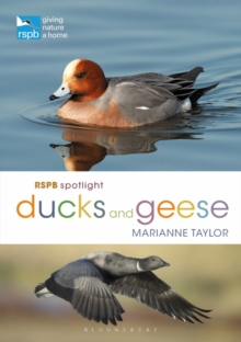 RSPB Spotlight Ducks and Geese, Paperback / softback Book