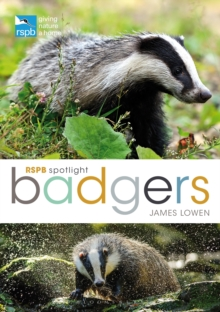 RSPB Spotlight: Badgers, Paperback / softback Book