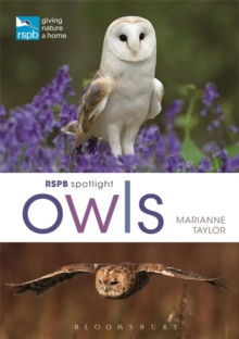 RSPB Spotlight Owls, Paperback / softback Book