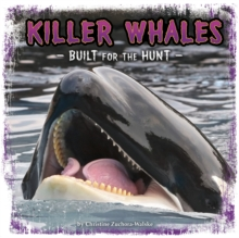 Killer Whales : Built for the Hunt, Paperback / softback Book