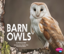 Barn Owls, Hardback Book