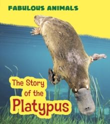 The Story of the Platypus, Paperback / softback Book
