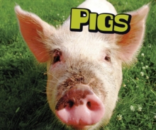 Pigs, Paperback / softback Book